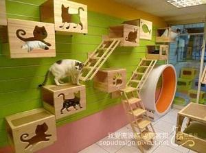 Decoraciones originales para casas haz la tuya - Mascotas originales para tener en casa ...